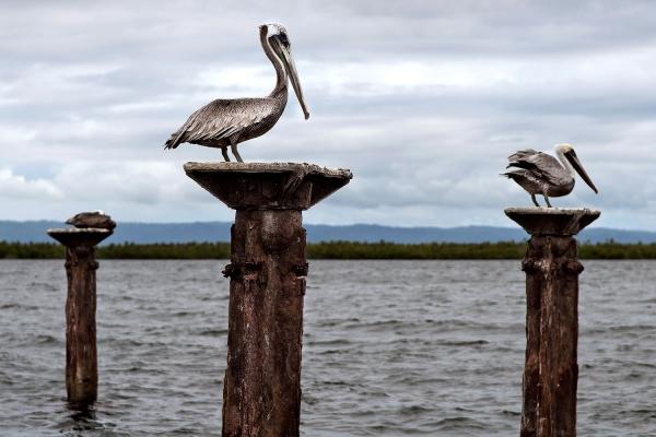 Looktrope République Dominicaine Parc National Los Haitises Oiseaux