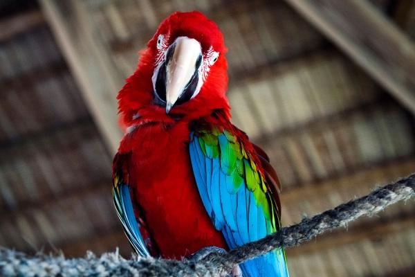 Looktrope République Dominicaine Puerto Plata Ocean World Perroquet