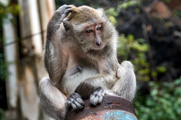 Looktrope Thaïlande Temple de la Grotte Du Tigre Singe